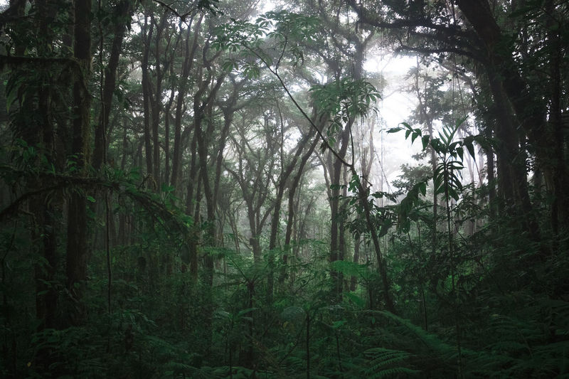 Santa Elena Nebula Forest, Costa Rica. Foggy Weather Green Green Color Tranquility Beauty In Nature Day Fog Foggy Foggy Forest Forest Growth Jungle Landscape Moody Nature Nirvana No People Outdoors Paradise Rainforest Rainforest Walks Scenics Tranquil Scene Tree