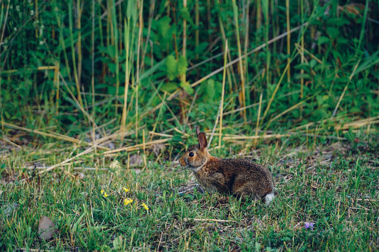 Hare on field against plants