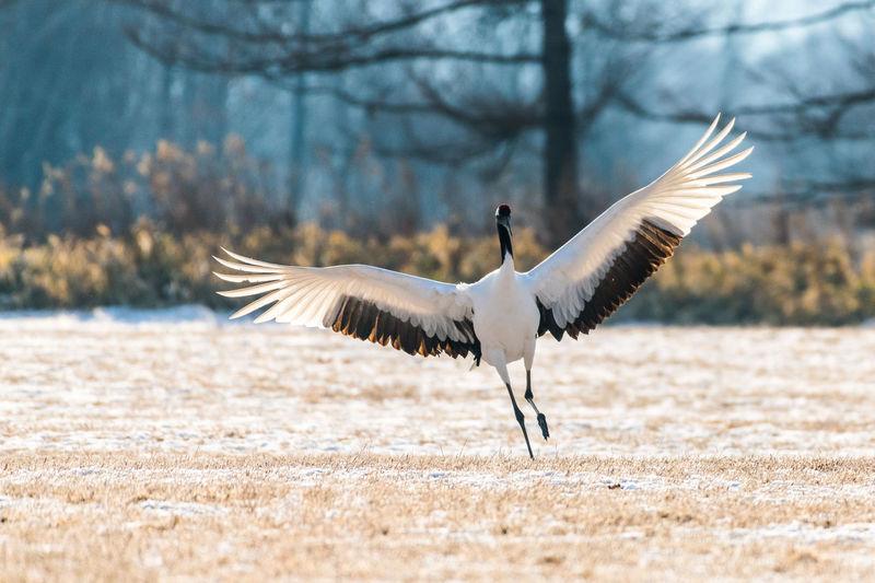 Crane landing on field