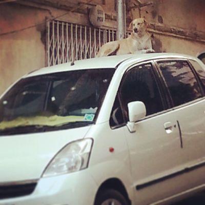 Instagram Mumbai Mumbaimag MumbaiPC igersmumbai instapicture instahub instacanvas streetscene pets dogs adorable streetsmart