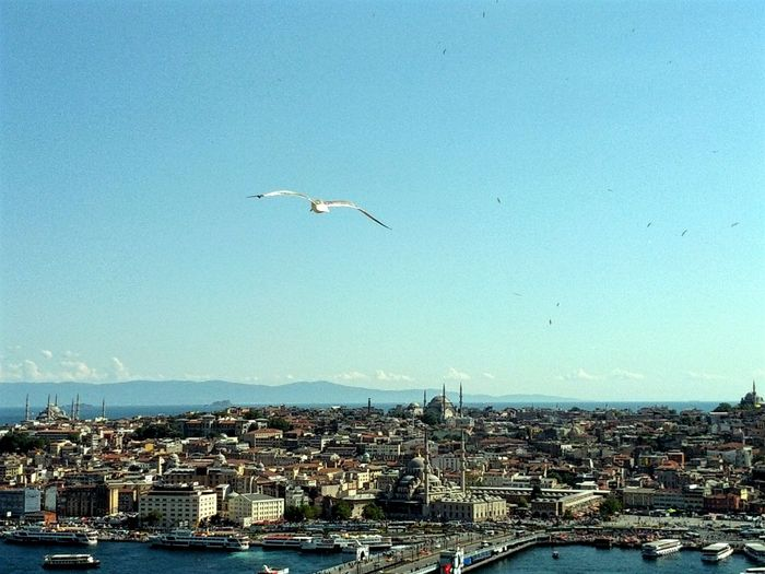 A Bird's Eye View Istanbul from the Galata Tower Cityscape Turkey Old Travel Clear Sky Bird Flying Seagull Architecture City Seagulls In Flight Urban Skyline Outdoors Building Exterior