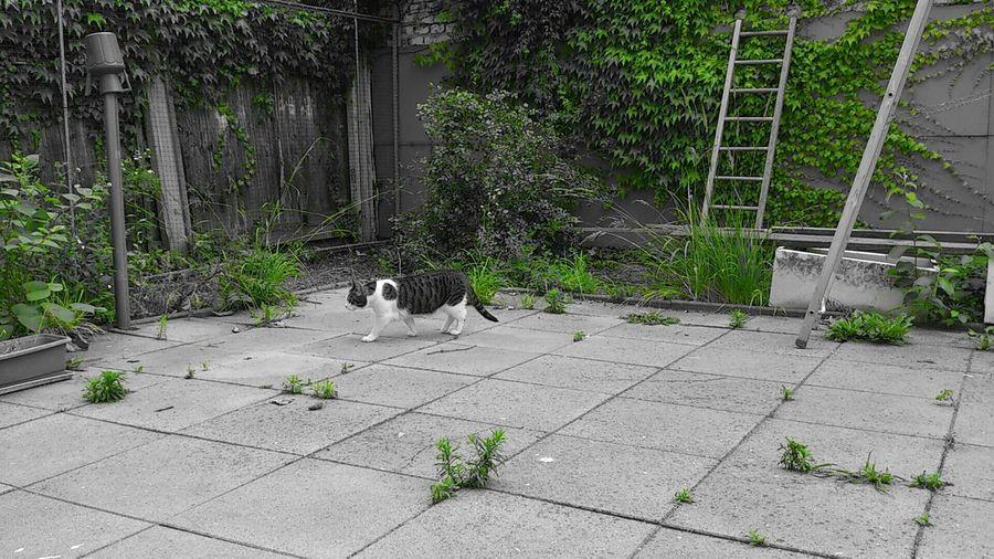Schwarzweiß/grün Teilweise Farbig Garten Cat Mein Kater I Love My Cat Juli 2015