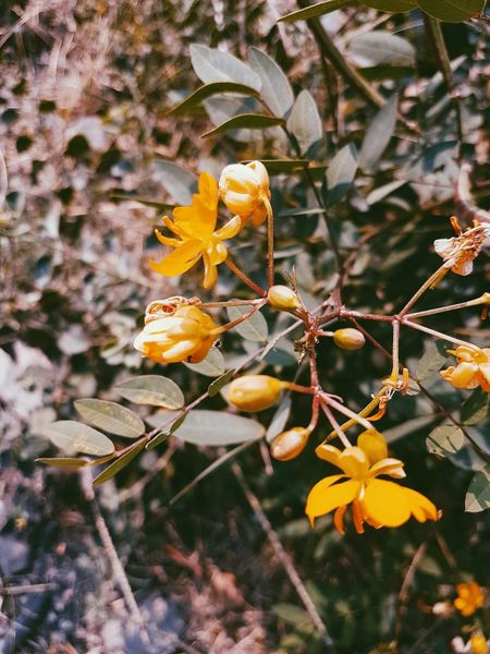 yellow flowers S7edgephotography India Karnataka Green Color Flowers Yellow VSCO
