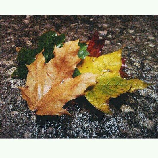 Autumn Colors Vscoautumn Vscocolors Colors