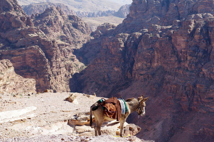 View of a horse on rock