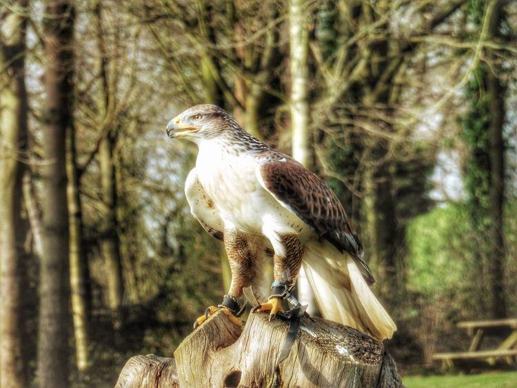 Birds Of EyeEm  EyeEmNewHere Nature Close-up Outdoors Bird EyeEm Selects