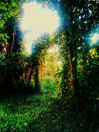 Taking Photos Borneo Sabahan Mothernature Enjoyingthegreenlife💚 Mobile Photography