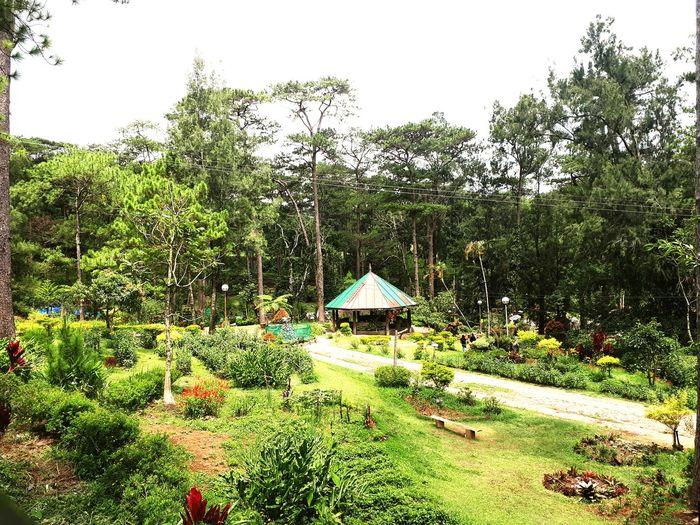 Botanical Garden in Baguio City, Philippines First Eyeem Photo