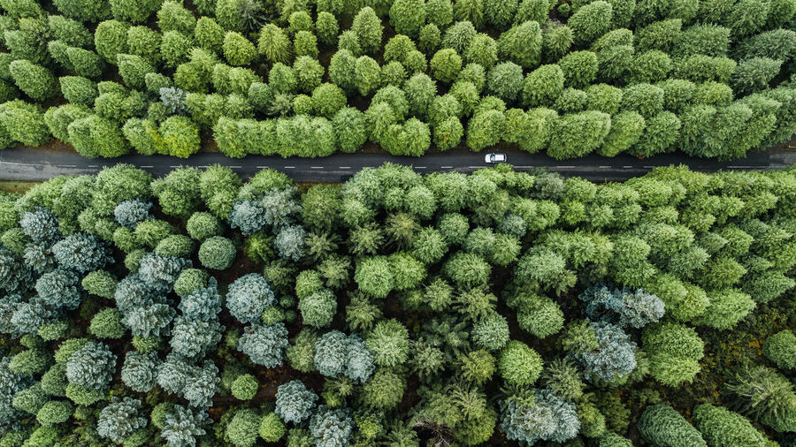 Top view of road through the green autumn forest. Drone  Drone Photography DJI Mavic Pro DJI X Eyeem Madeira Island Pine Woodland Directly Above Top View Above Autumn Road Travel Destinations Nature Rural Scene Backgrounds Day Abundance Fir Tree Car Aerial View Aerial Shot Outdoors Tropical Climate Beauty In Nature High Angle View