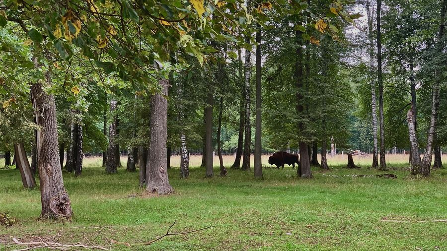 View of trees on field