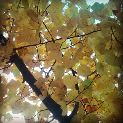 Autumn Leaves Autumn Leaves Trees Türkenschanzpark