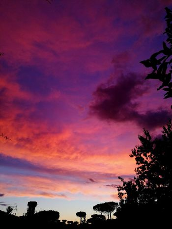 Sunset in August Sky Sunset Cloud - Sky Tree Nature Beauty In Nature Scenics Outdoors No People Star - Space Astronomy Galaxy Earth Pinksunset Love Love It Beautiful Beautiful Nature Home Day