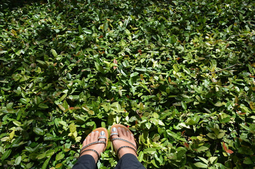 feet among the green Personal Perspective Beauty In Nature Nature Leisure Activity Real People Human Body Part Green Color One Person Outdoors Lifestyles Growth Foliage Personal Style Bling Sandals Fashion Rhinestones Sparkle Groundcover Ground Cover Footselfie One Woman Only Green Leaves Feet Footwear