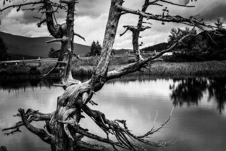 Driftwood on tree by lake against sky