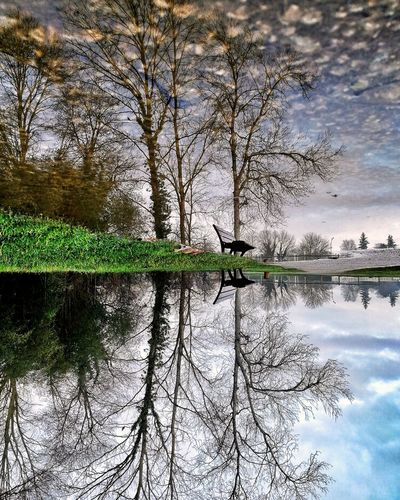 Reflection of bare trees in lake against sky