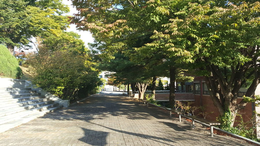 아름다운 Korea University Campus Romantic Trees Relax Path In Nature Sensitive Tree Shadow Sunlight Walkway