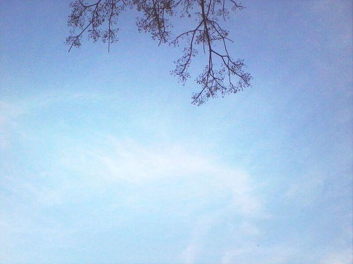 Sky Trees Cloudporn Theskyaboveus