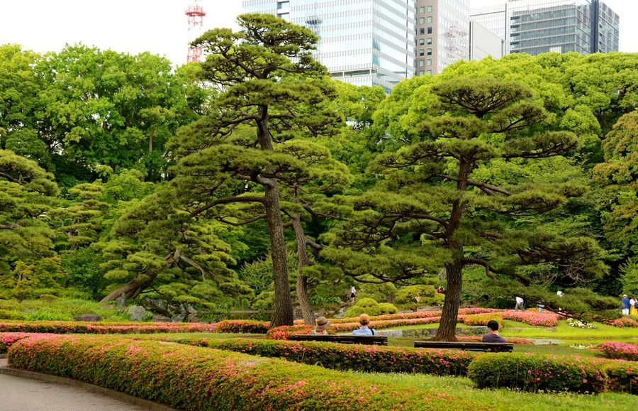 Imperial Palace Garden Day Garden Photography Grass Green Color Growth Outdoors Tokyo Japan Tokyo Photography Tree