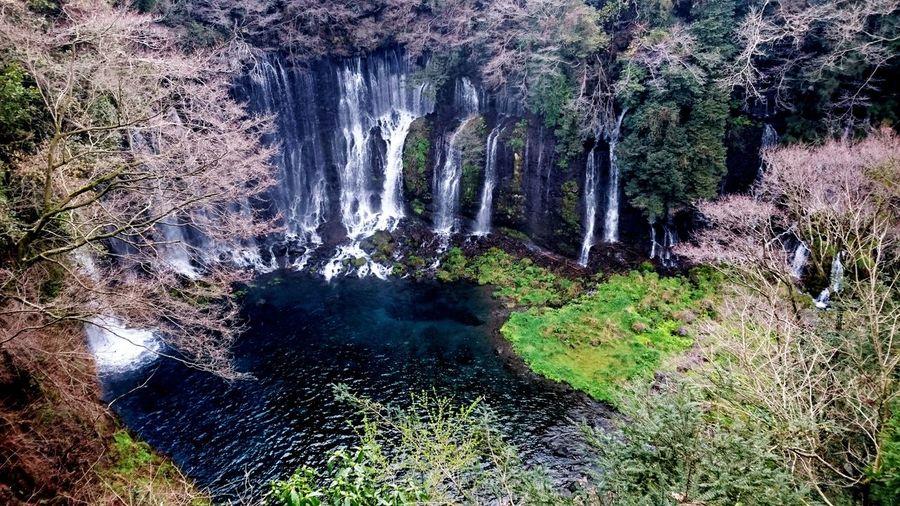 白糸の滝 白糸の滝 世界文化遺産 天然記念物 Enjoying Life Views World Worldwide Beautifull Shizuoka Japan Amazing Waterfall Culture Water Nature Camera Xperiaz4 Fhoto Fhotography Naturalmonument