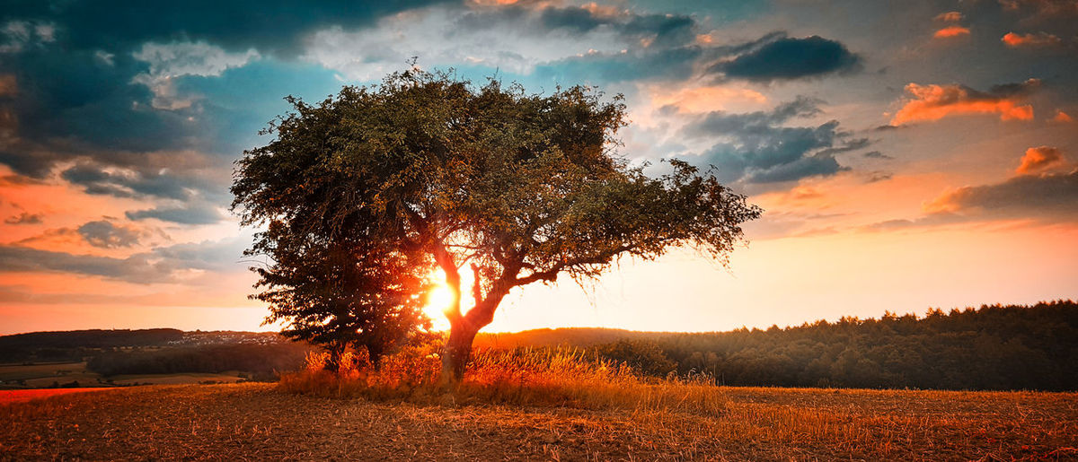 Sunlight streaming through trees on field during sunset