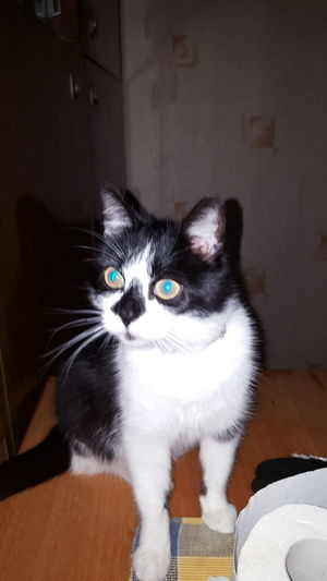 Мурка Domestic Cat Pets One Animal Animal Themes Domestic Animals Feline Looking At Camera Mammal No People Portrait Indoors  Whisker Close-up Day