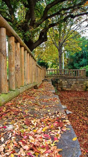 Autumn leaves on footpath in park