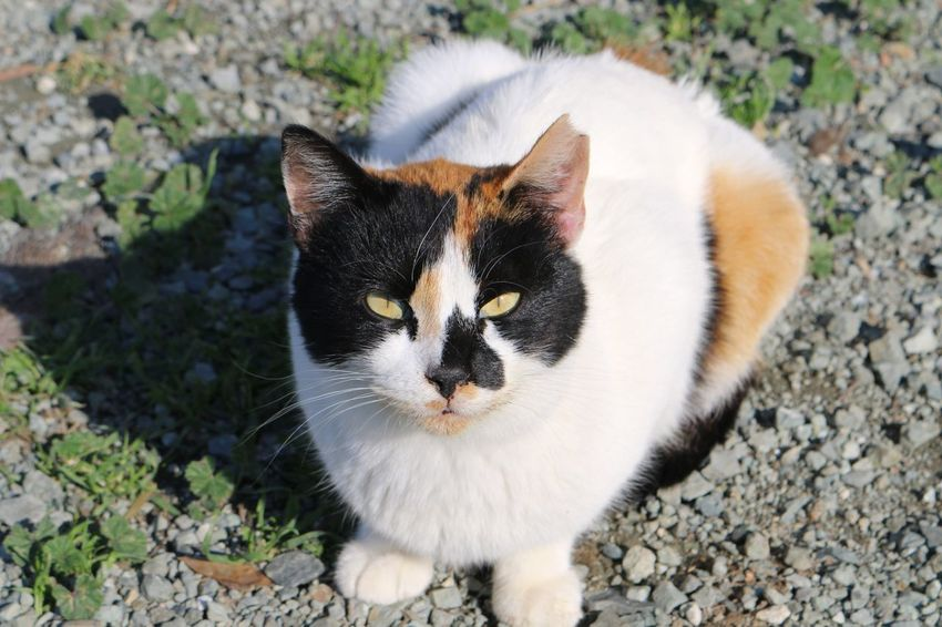 Cyprus Larnaca, Cyprus Larnaca Beauty In Nature Naturelovers Nature Photography Nature_collection Cat Lovers Cat♡ Cats Domestic Cat Feline Cat Domestic Animals Pets High Angle View Animal Themes One Animal Mammal No People Sitting Portrait Outdoors Day Close-up