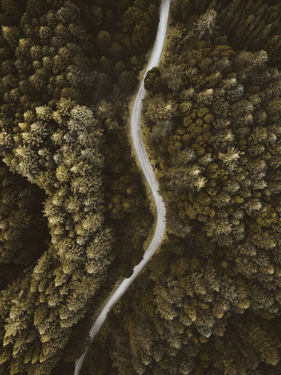 Above Aerial Australia Beauty In Nature Dji Drone  Forest Forest Road Forest Trees Green Lonelyplanet Nature Nature Photography Outdoors Road Trees EyeEmNewHere Fresh on Market 2017 The Week On EyeEm Perspectives On Nature