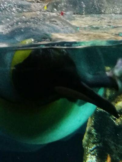 Water No People Underwater UnderSea Pinguin Pinguins  Pingüino The Week On EyeEm