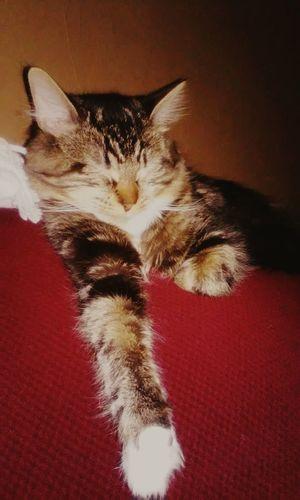 Relaxing Cute Pets Angrycat Cat♡ Cutecats