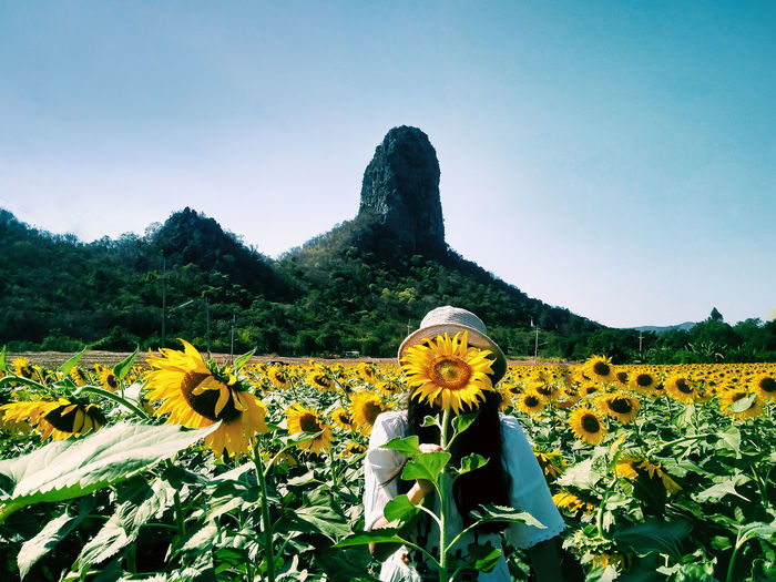 Sunflower and