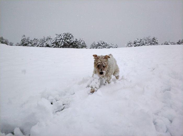 EyeEm Best Shots EyeEmNewHere Ligth Eye4photography  EyeEm Selects EyeEmBestPics EyeEm Gallery Snow ❄ Snow Winter Burgos Snowing Snow Animal Wildlife Animals In The Wild Animal Themes Winter Cold Temperature Animal