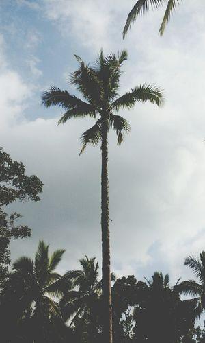 Open Edit Summer Vibes Skies Trees