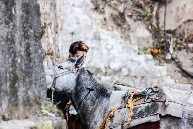 EyeEmNewHere Outdoors Animal Themes One Animal Horse