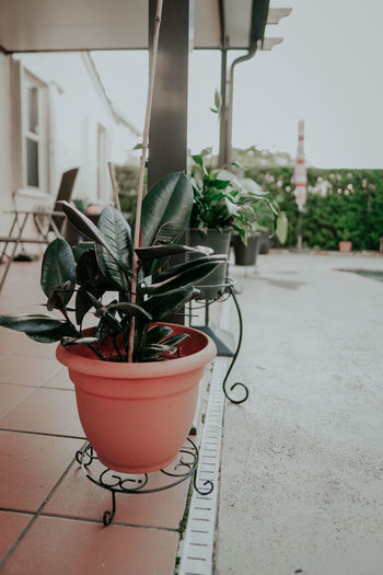 Potted plant in pot