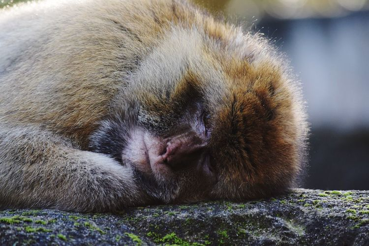 Animal Themes One Animal Mammal Sleeping No People Domestic Animals Pets Day Close-up Outdoors Zoo