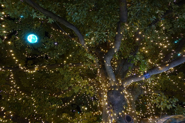 Low angle view of illuminated tree at night