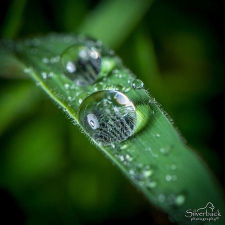 Droplets Macro Photography Droplets Droplets, Water Droplets, Flowers  Droplets Of Water Droplets Macro Droplet Outdoors Green Color Close-up Nature Plant Beauty In Nature