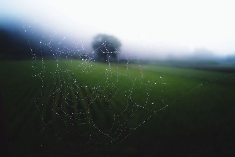 Close-up of wet spider web against sky