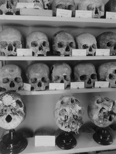 Black & White Skulls Old