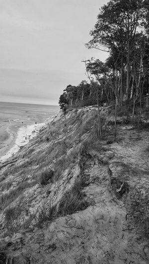 nice Karklė Tree Sea Beach Sand Low Tide Sky Horizon Over Water