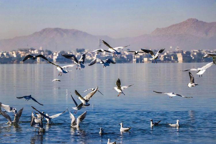 Birds flying over lake against mountain range