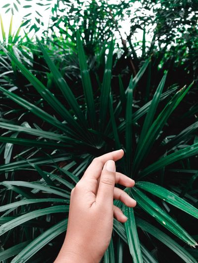 Cropped hand of person touching plants growing in park