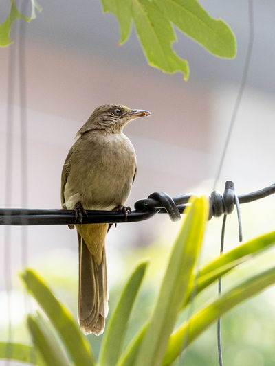 Close-up of bird perching on a plant