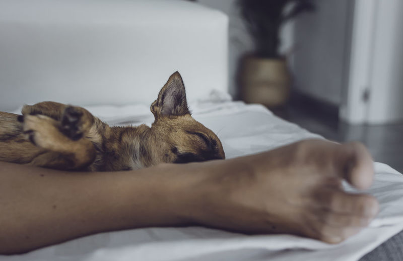 Dog sleeping on bed at home