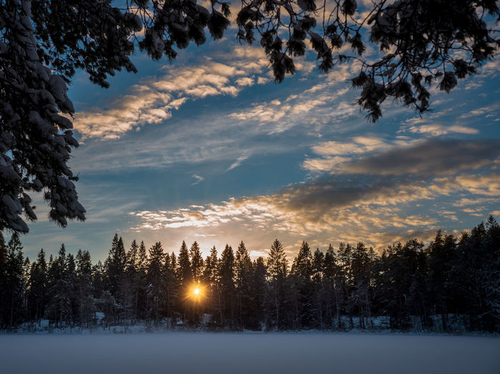 Evening sun through an opening in the winter frorest. Oslo, Norway. Sky Winter Cold Temperature Snow Beauty In Nature Cloud - Sky Tranquil Scene Scenics - Nature Tranquility Nature Landscape Environment No People Non-urban Scene Covering Land Idyllic Oslo Norway Forest Hikingadventures Lake Forest Photography Forestscape Capture Tomorrow