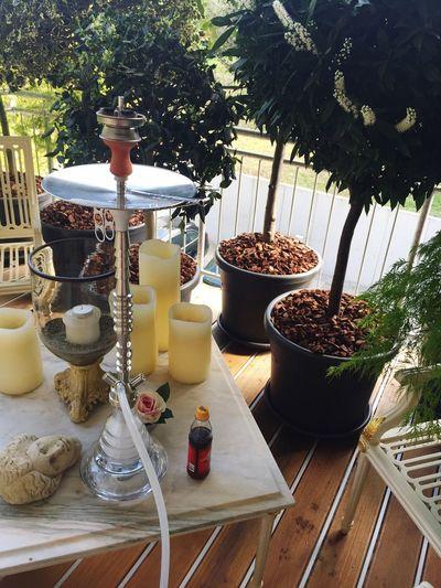 Shisha Time Mezzomix Table No People Plate Bowl Day Nature Tree Outdoors Freshness