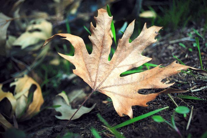 Macro Nature Leaves Autumn Golden Leaf Cyprus Nature Photography OpenEdit Open Edit Nature's Diversities Natures Diversities
