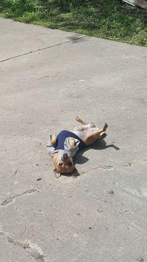 One Animal Ilovemydog Mydogisthebestintheworld Pet Photography  Chihuahua My Pet Dog❤ Dogofeyeem Dog Photography Dog Life Animalphotography Pets Corner Outdoor Photography Peanut Dog Take Photos Dogslife Outside :-)