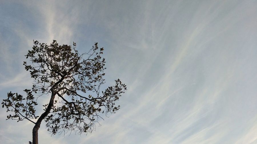 Plant Cloudy Cloudstream Phukradueng Sunrise Timestream Tree Sky Treetop Single Tree